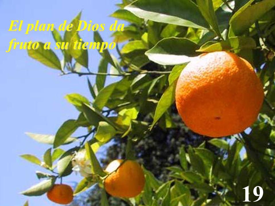 El plan de Dios da fruto a su tiempo