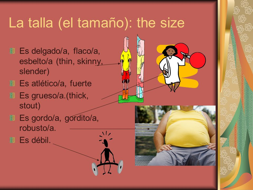 La talla (el tamaño): the size