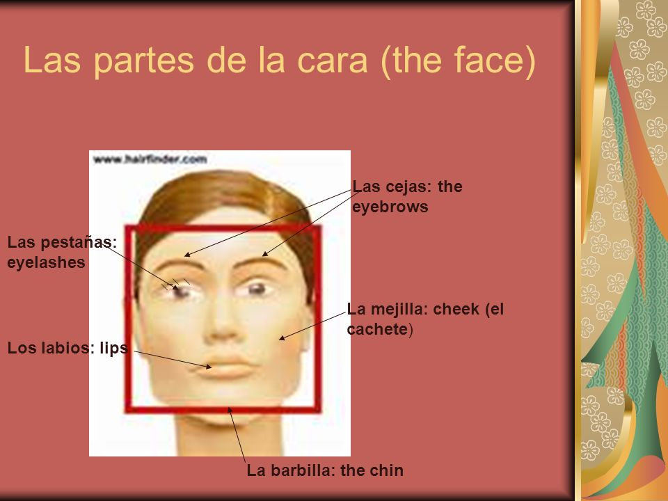 Las partes de la cara (the face)