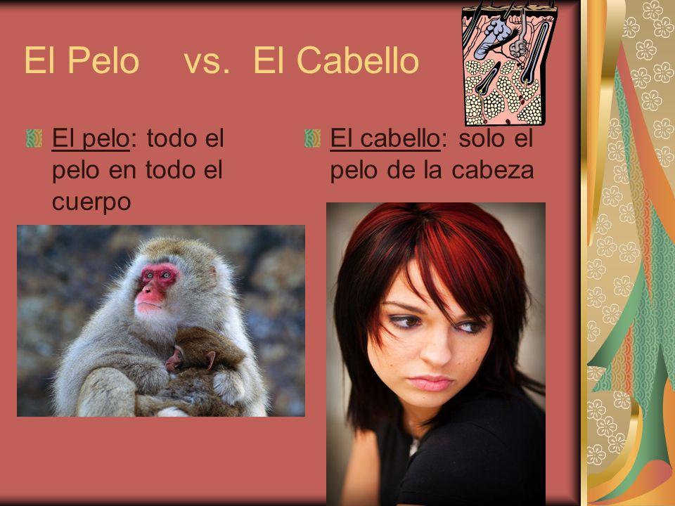 El Pelo vs. El Cabello El pelo: todo el pelo en todo el cuerpo