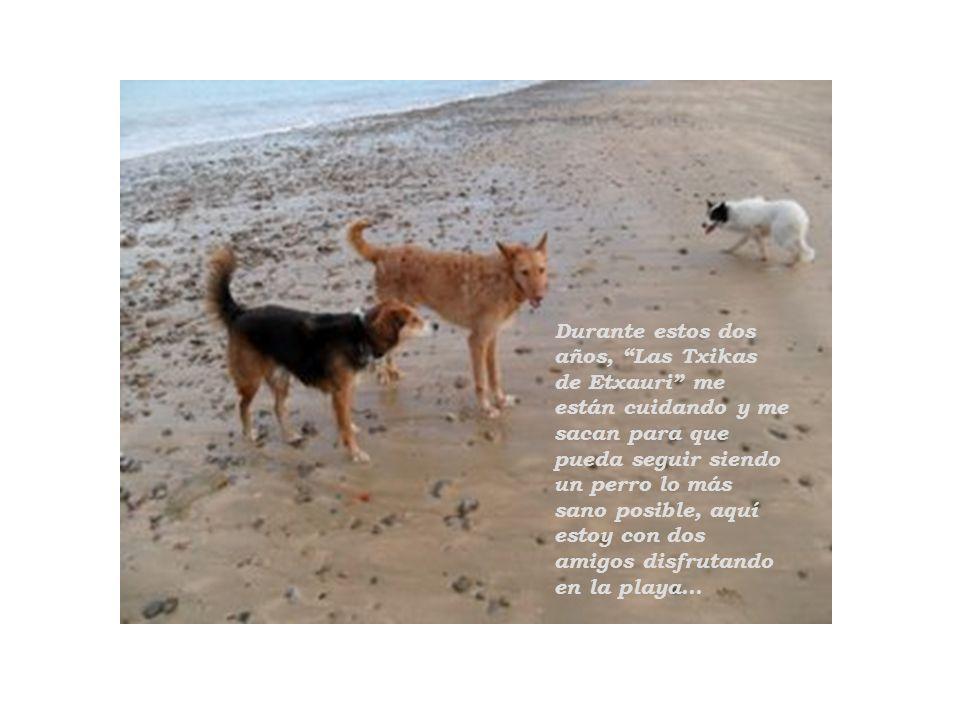 Durante estos dos años, Las Txikas de Etxauri me están cuidando y me sacan para que pueda seguir siendo un perro lo más sano posible, aquí estoy con dos amigos disfrutando en la playa...