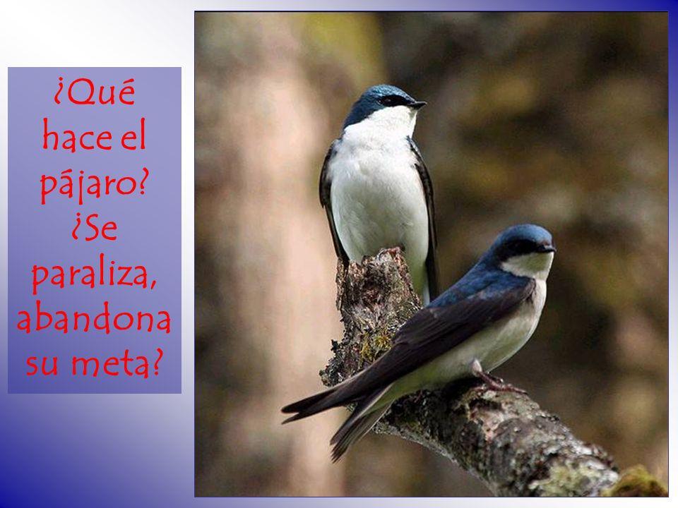 ¿Qué hace el pájaro ¿Se paraliza, abandona su meta