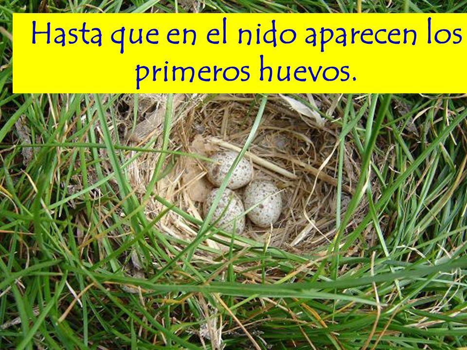 Hasta que en el nido aparecen los