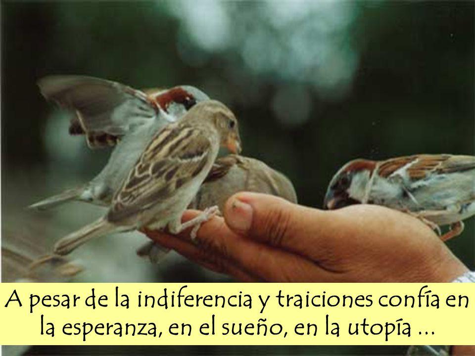 A pesar de la indiferencia y traiciones confía en la esperanza, en el sueño, en la utopía ...