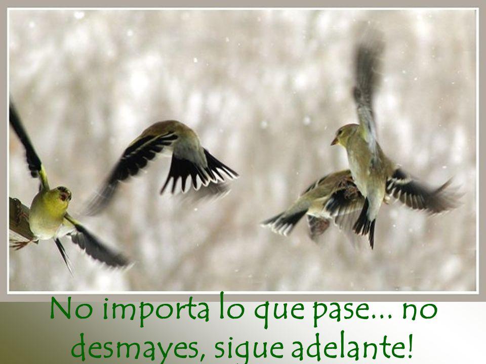 No importa lo que pase... no desmayes, sigue adelante!