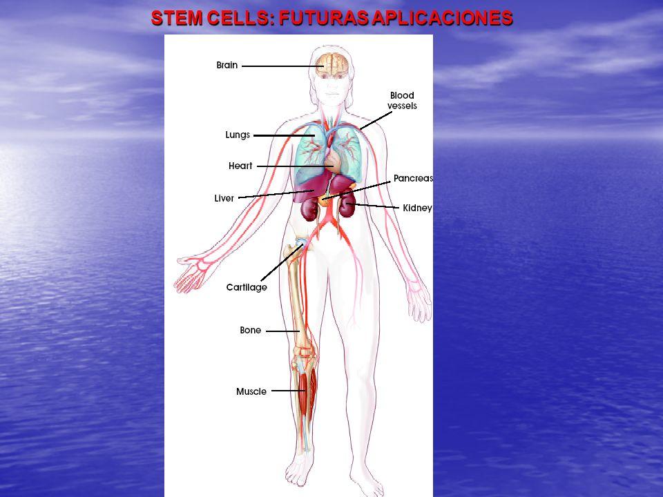 STEM CELLS: FUTURAS APLICACIONES