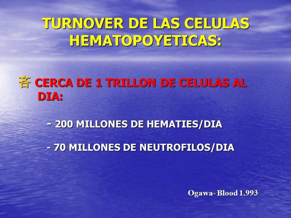 TURNOVER DE LAS CELULAS HEMATOPOYETICAS: