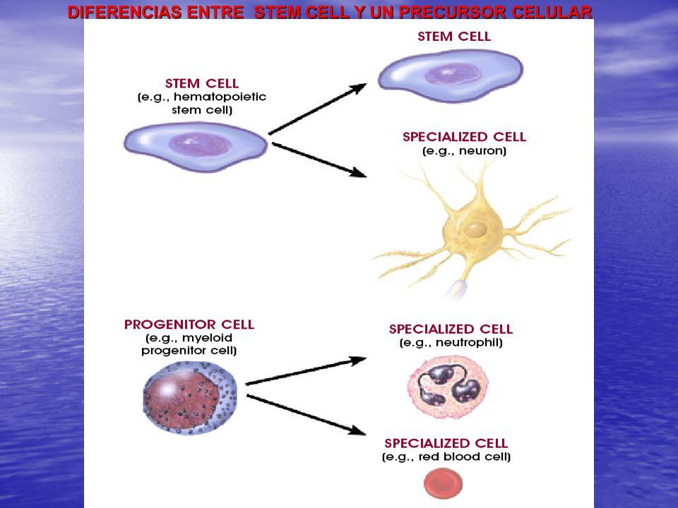 DIFERENCIAS ENTRE STEM CELL Y UN PRECURSOR CELULAR