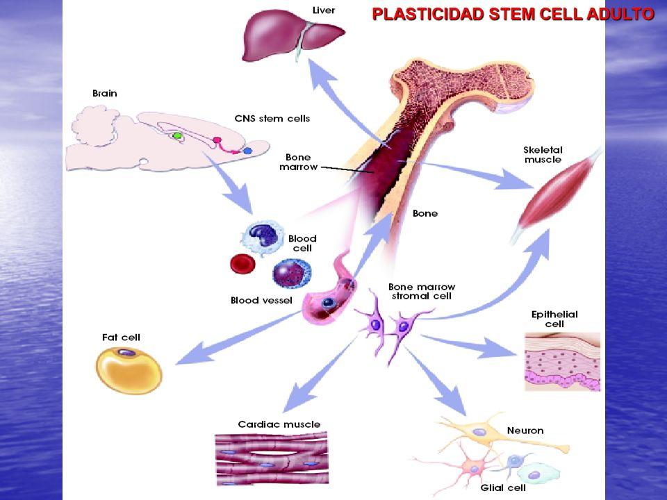 PLASTICIDAD STEM CELL ADULTO