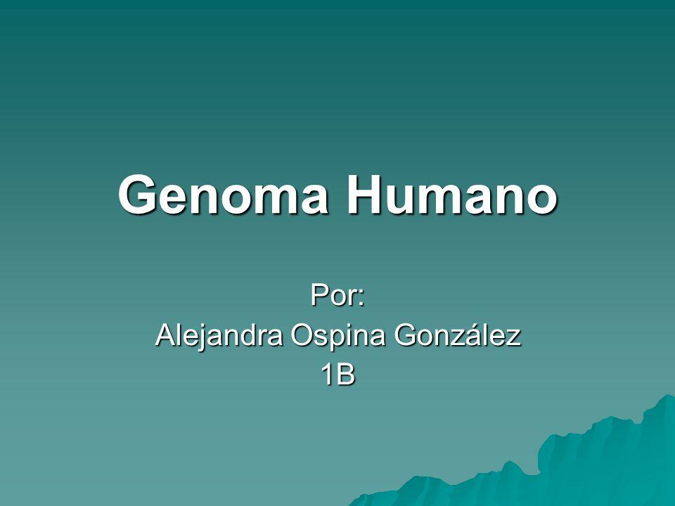 Por: Alejandra Ospina González 1B