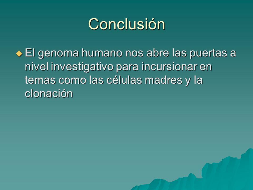 Conclusión El genoma humano nos abre las puertas a nivel investigativo para incursionar en temas como las células madres y la clonación.