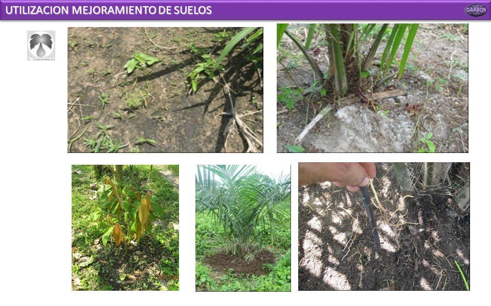 UTILIZACION MEJORAMIENTO DE SUELOS