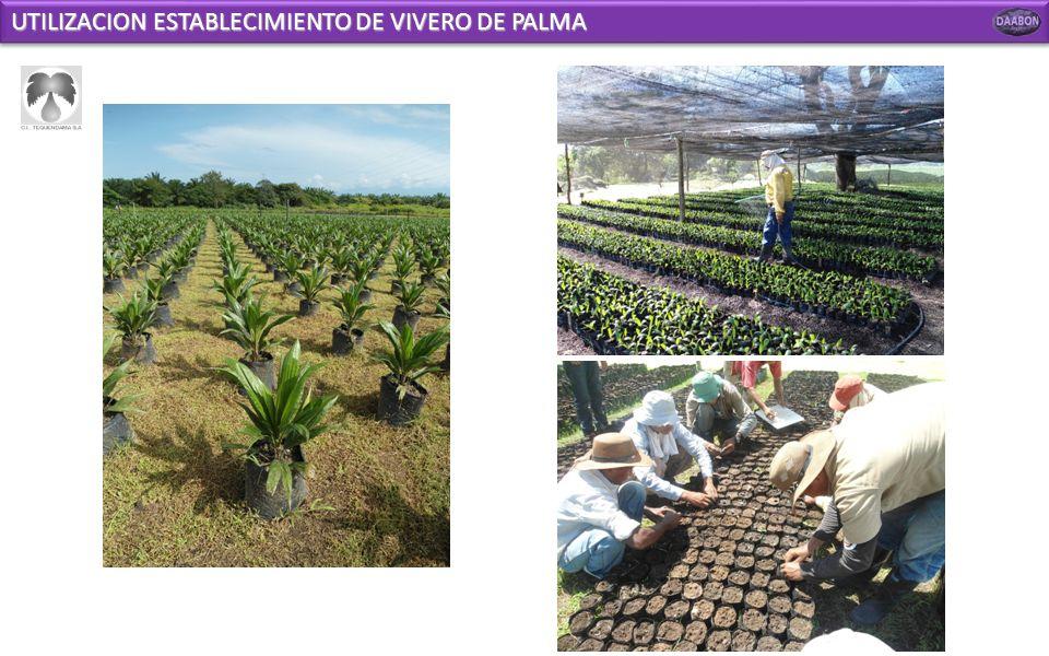 UTILIZACION ESTABLECIMIENTO DE VIVERO DE PALMA