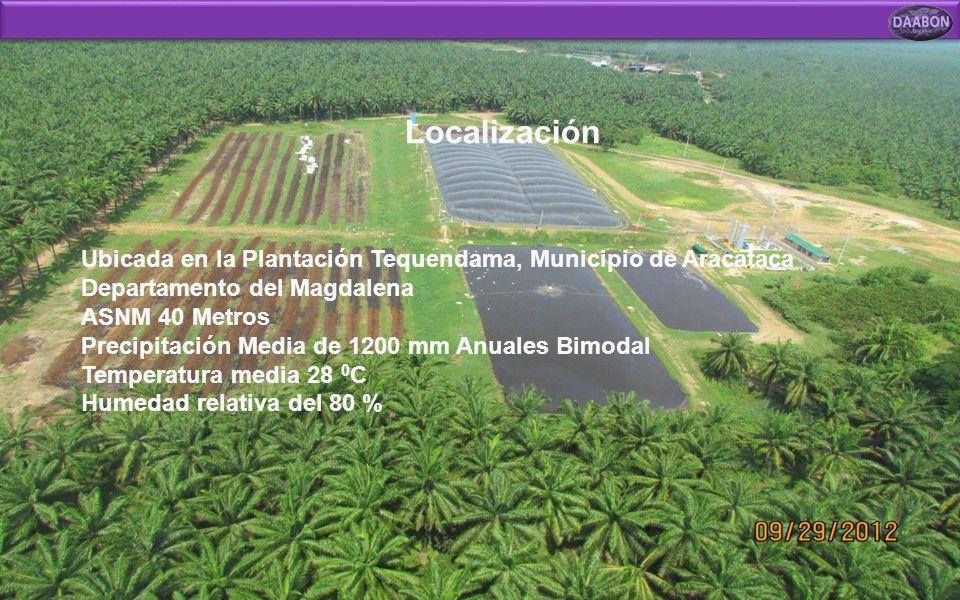 Localización Ubicada en la Plantación Tequendama, Municipio de Aracataca Departamento del Magdalena.