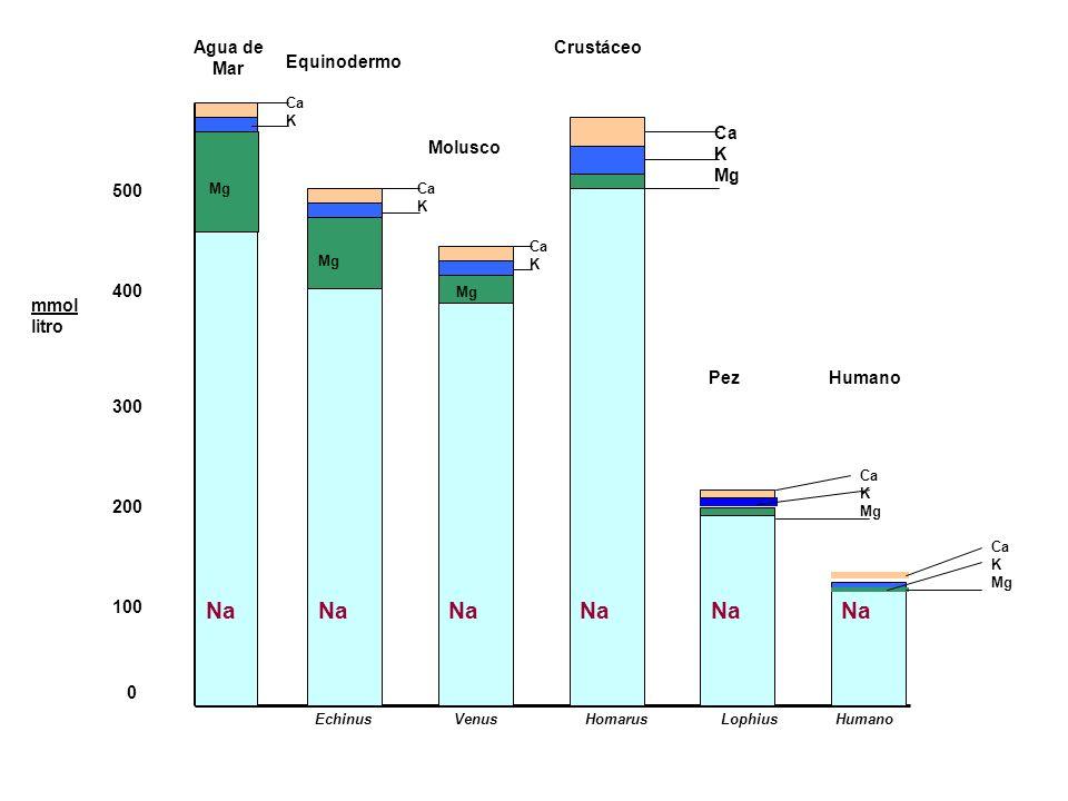 Na Na Na Na Na Na Agua de Mar Crustáceo Equinodermo Ca K Mg Molusco