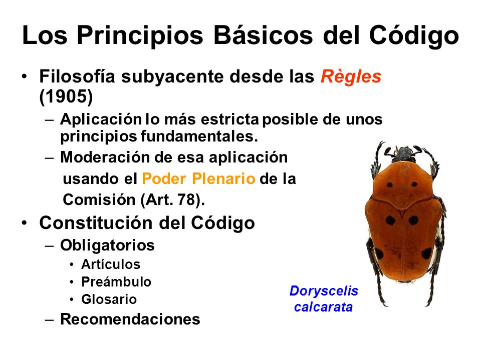 Los Principios Básicos del Código