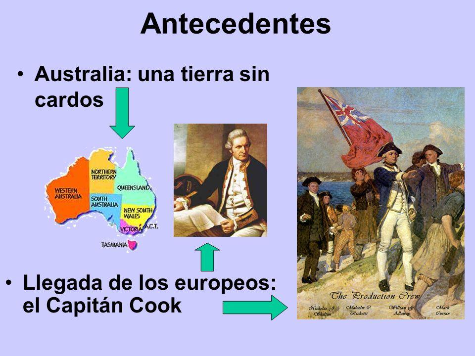 Antecedentes Australia: una tierra sin cardos