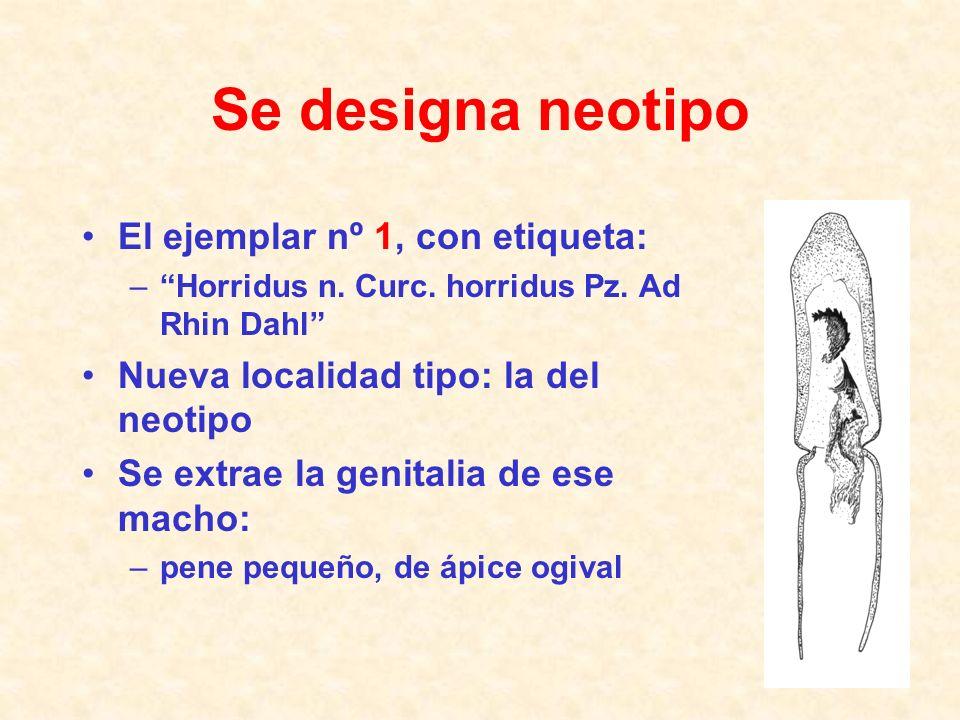 Se designa neotipo El ejemplar nº 1, con etiqueta: