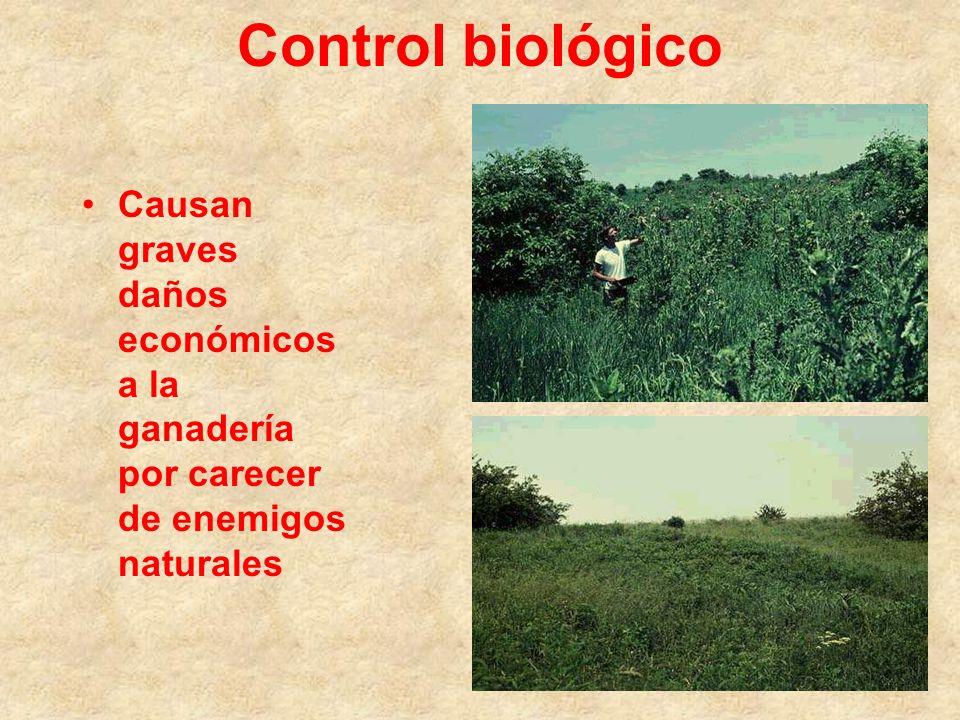 Control biológico Causan graves daños económicos a la ganadería por carecer de enemigos naturales