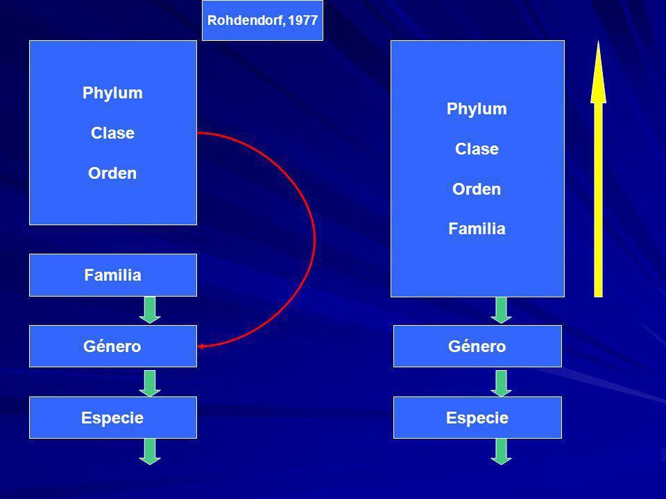 Phylum Clase Orden Phylum Clase Orden Familia Phylum Clase Orden