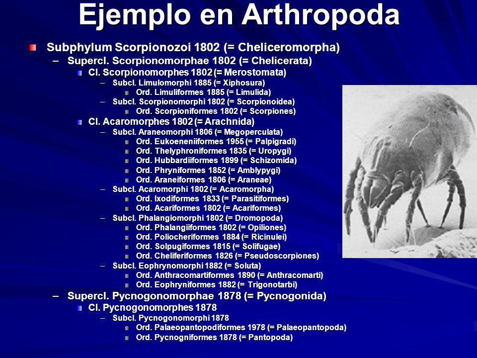 Ejemplo en Arthropoda Subphylum Scorpionozoi 1802 (= Cheliceromorpha)
