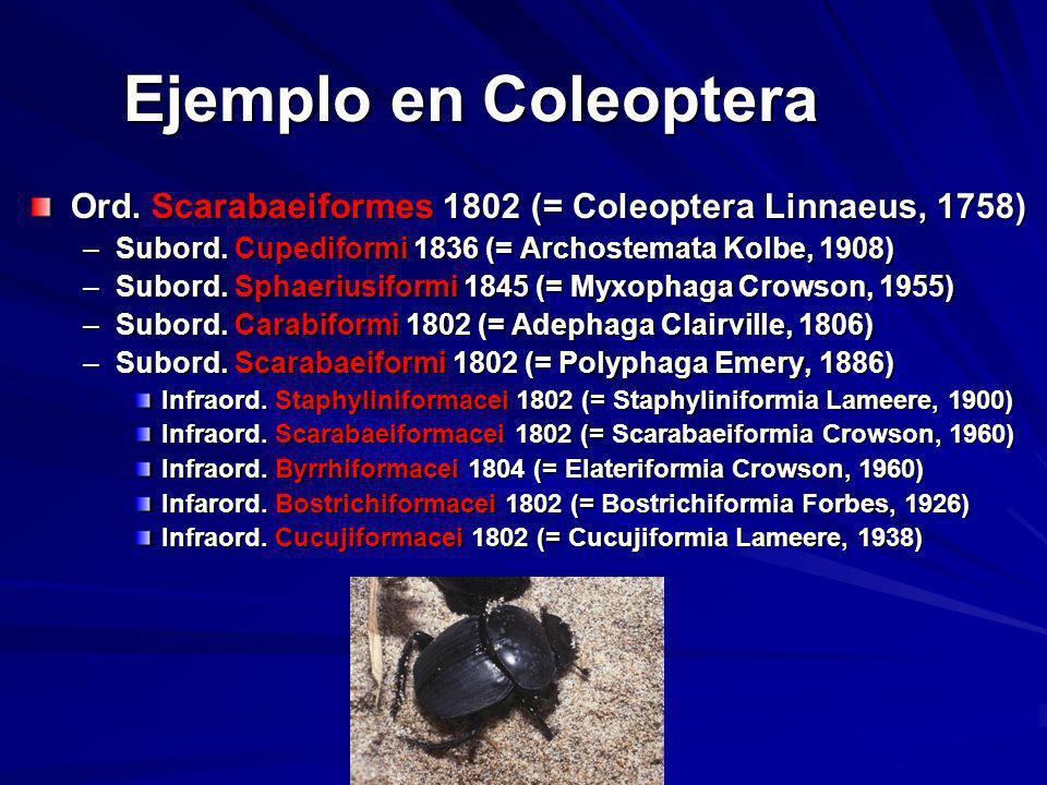 Ejemplo en Coleoptera Ord. Scarabaeiformes 1802 (= Coleoptera Linnaeus, 1758) Subord. Cupediformi 1836 (= Archostemata Kolbe, 1908)