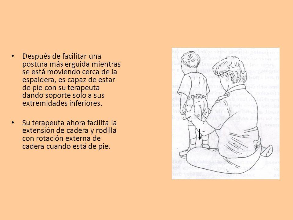 Después de facilitar una postura más erguida mientras se está moviendo cerca de la espaldera, es capaz de estar de pie con su terapeuta dando soporte solo a sus extremidades inferiores.