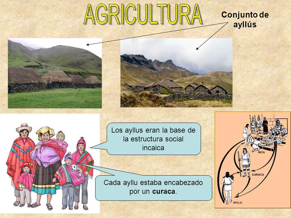 AGRICULTURA Conjunto de ayllús