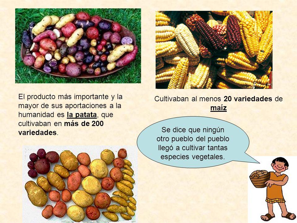 Cultivaban al menos 20 variedades de maíz