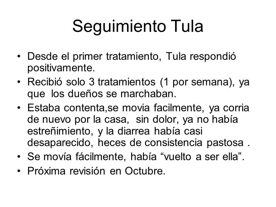 Seguimiento Tula Desde el primer tratamiento, Tula respondió positivamente.