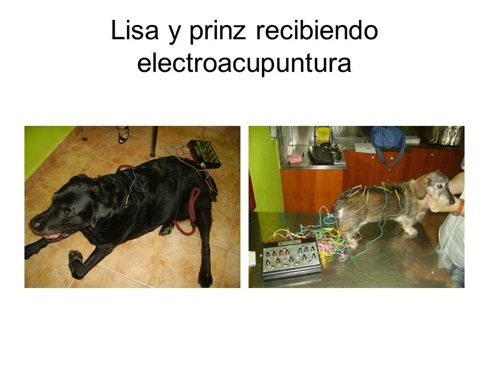 Lisa y prinz recibiendo electroacupuntura