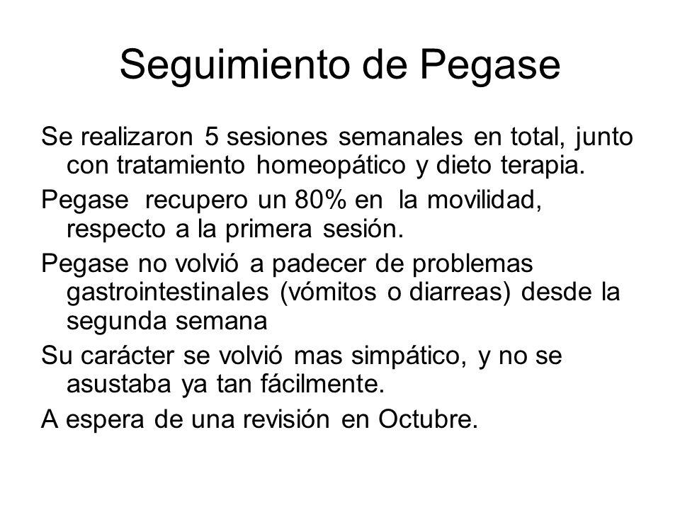 Seguimiento de Pegase Se realizaron 5 sesiones semanales en total, junto con tratamiento homeopático y dieto terapia.