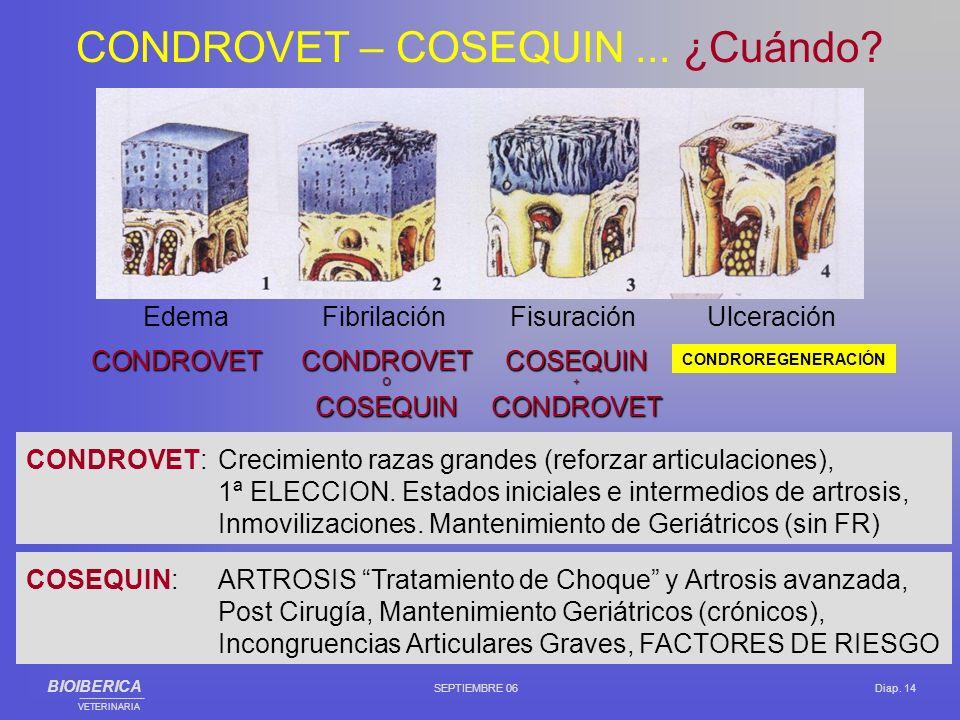 CONDROVET – COSEQUIN ... ¿Cuándo