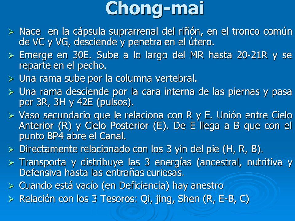 Chong-mai Nace en la cápsula suprarrenal del riñón, en el tronco común de VC y VG, desciende y penetra en el útero.