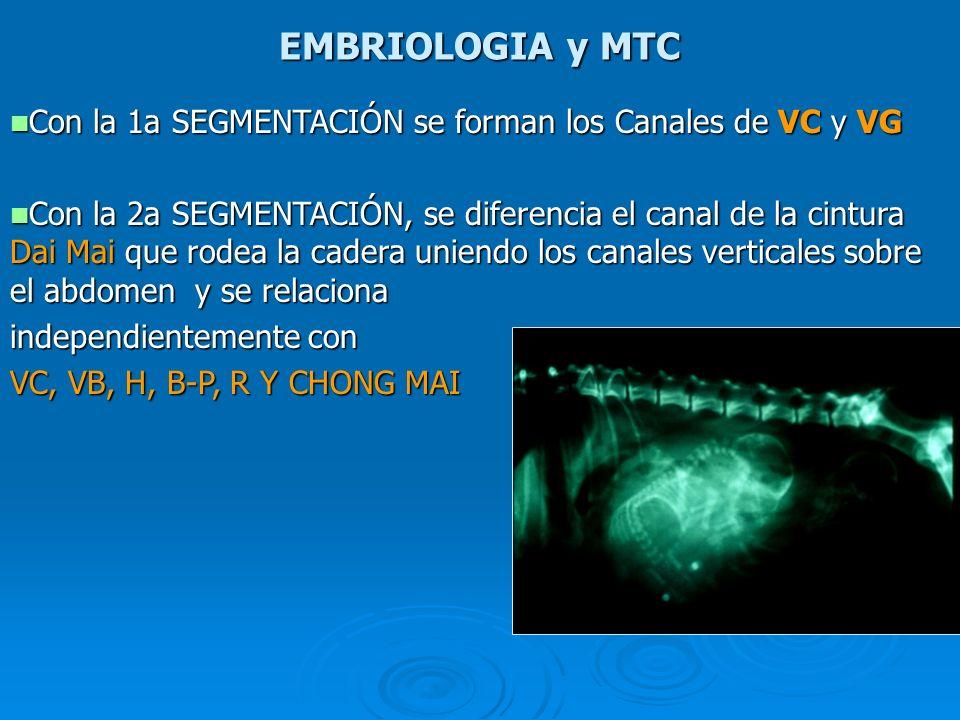 EMBRIOLOGIA y MTC Con la 1a SEGMENTACIÓN se forman los Canales de VC y VG.