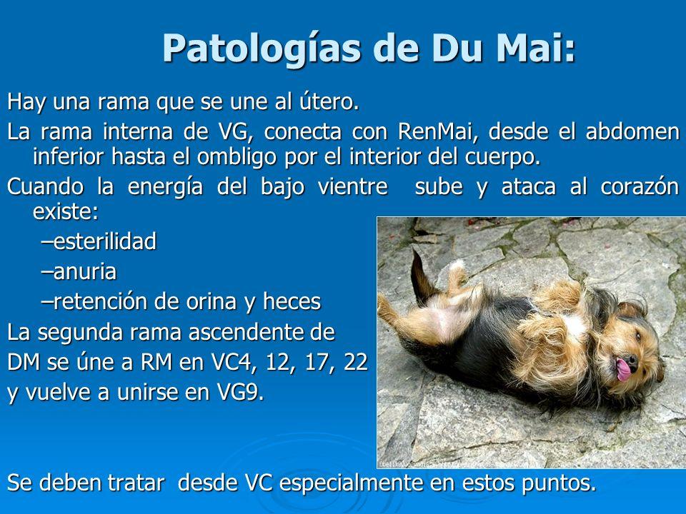 Patologías de Du Mai: Hay una rama que se une al útero.