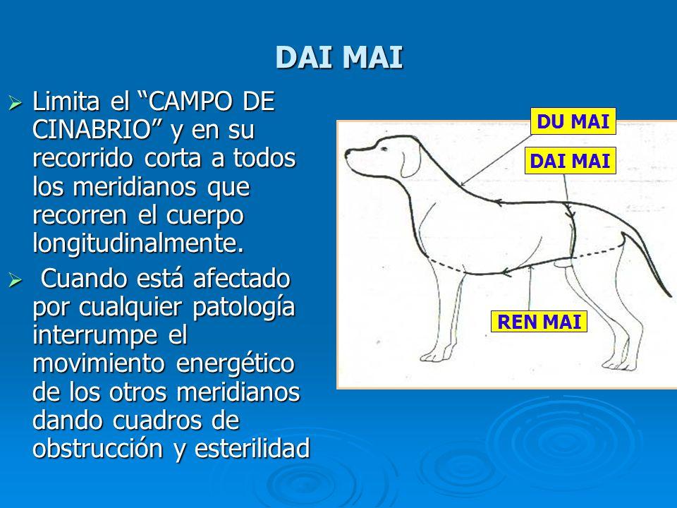 DAI MAI Limita el CAMPO DE CINABRIO y en su recorrido corta a todos los meridianos que recorren el cuerpo longitudinalmente.