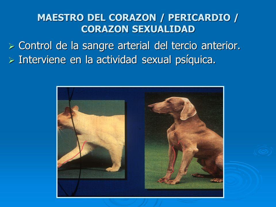 MAESTRO DEL CORAZON / PERICARDIO / CORAZON SEXUALIDAD