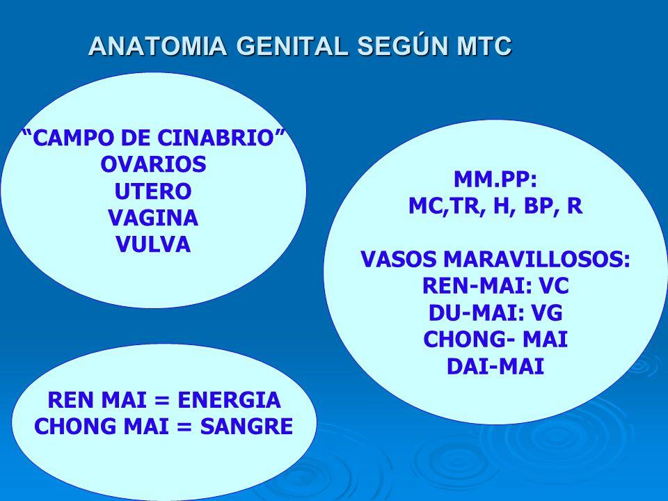 ANATOMIA GENITAL SEGÚN MTC