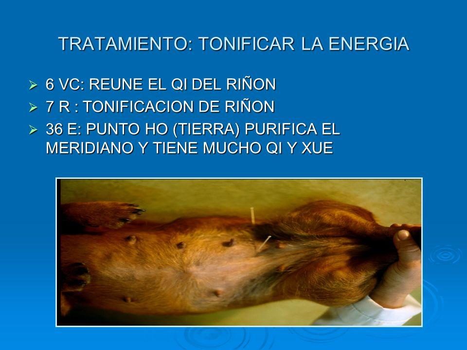 TRATAMIENTO: TONIFICAR LA ENERGIA