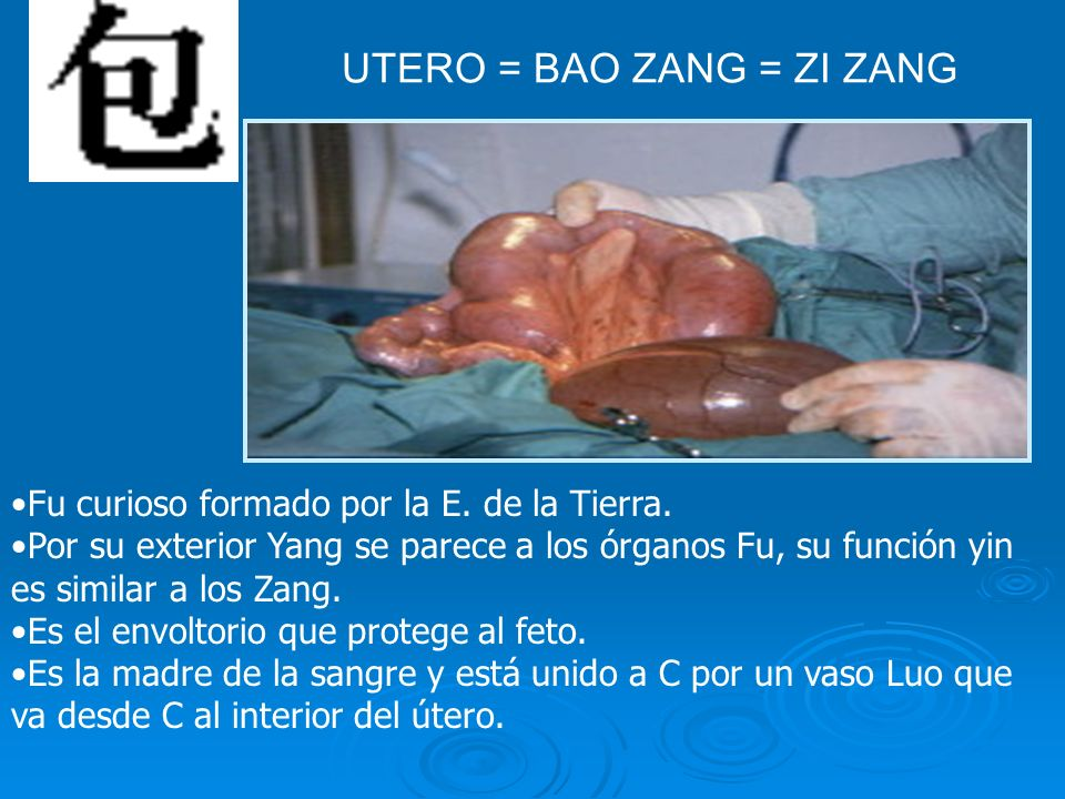 UTERO = BAO ZANG = ZI ZANG
