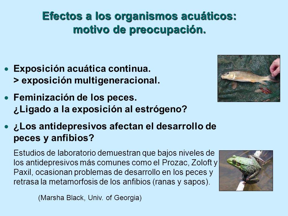 Efectos a los organismos acuáticos: motivo de preocupación.