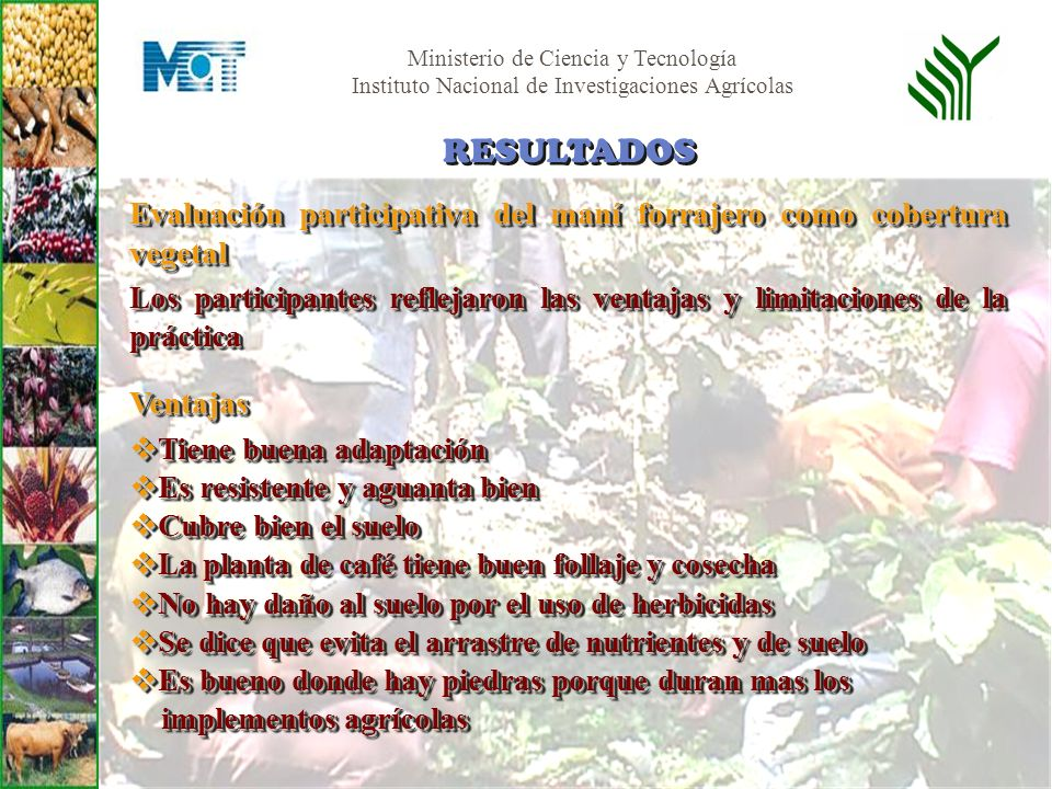 RESULTADOS Evaluación participativa del maní forrajero como cobertura vegetal.