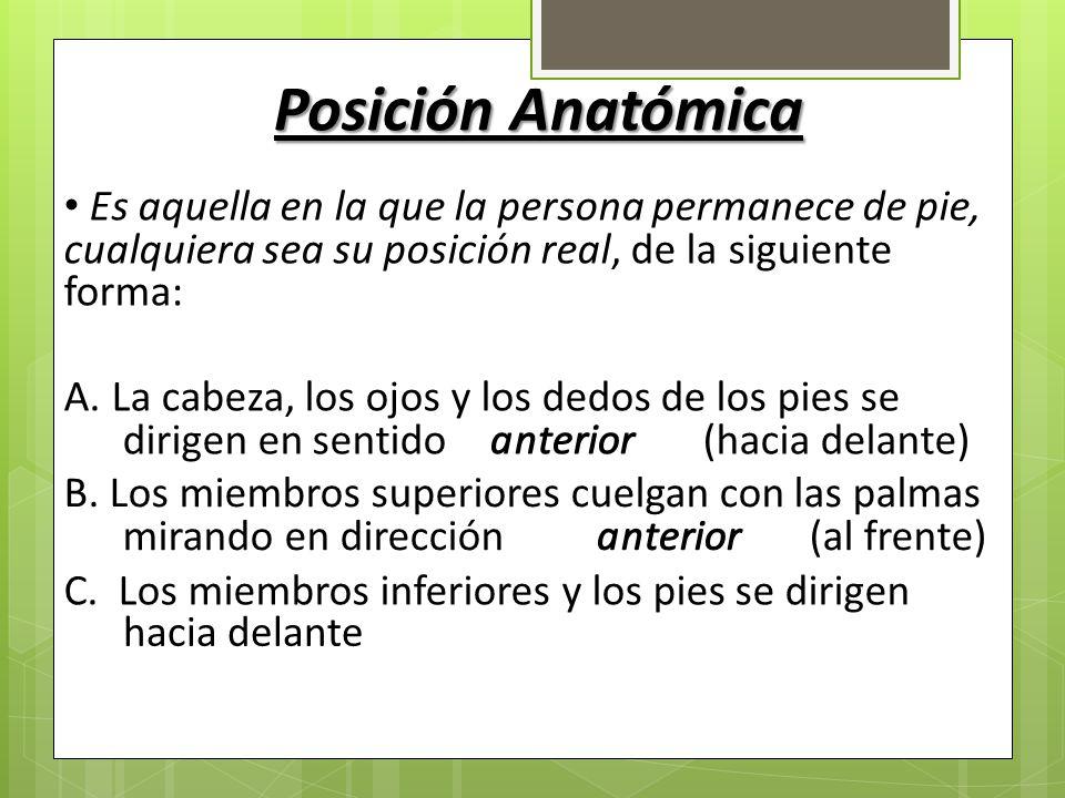 Hermosa Anatomía De La Persona Bosquejo - Anatomía de Las ...