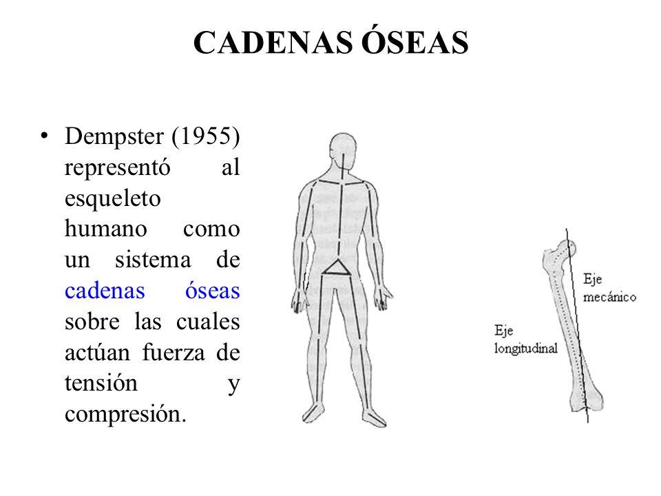 Encantador Diagrama De La Estructura ósea Humana Cresta - Anatomía ...