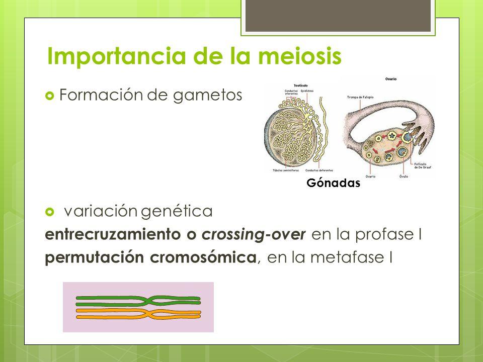 Importancia de la meiosis