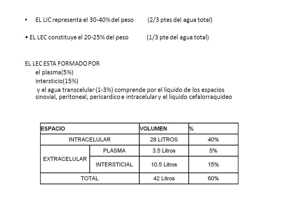 EL LIC representa el 30-40% del peso (2/3 ptes del agua total)