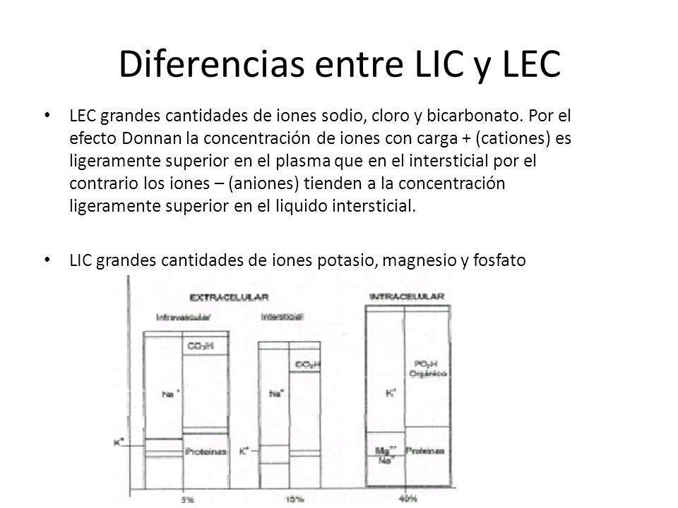 Diferencias entre LIC y LEC