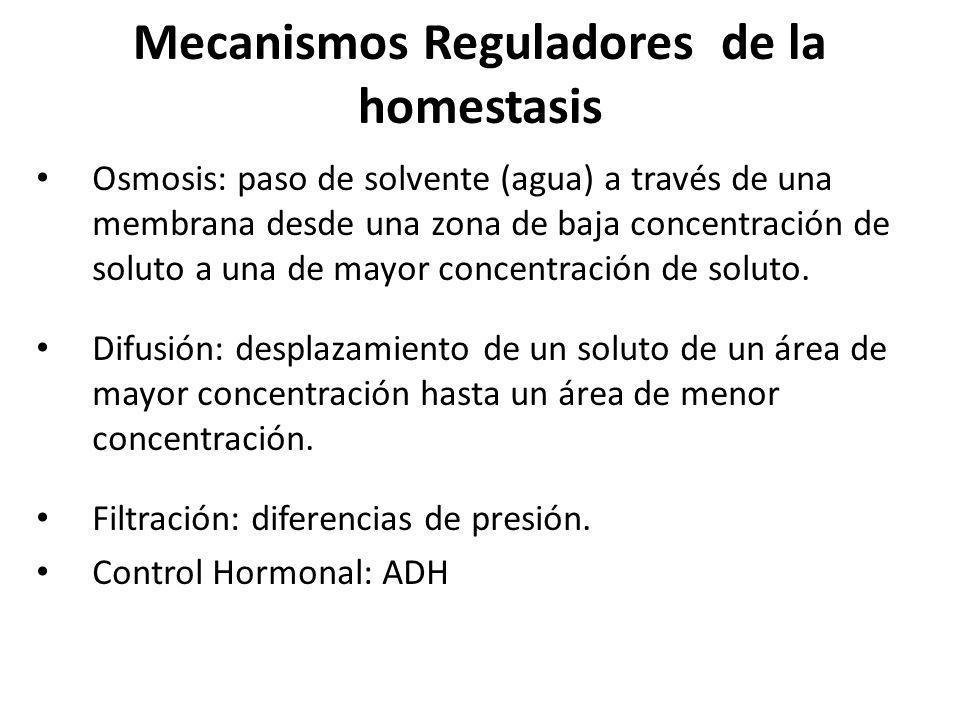 Mecanismos Reguladores de la homestasis