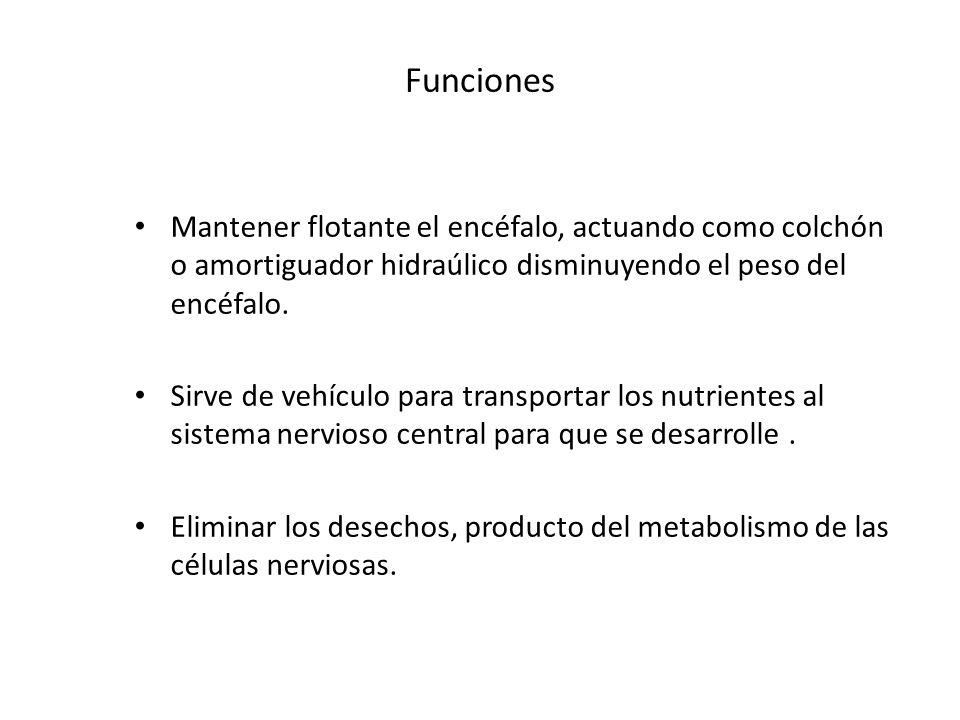 Funciones Mantener flotante el encéfalo, actuando como colchón o amortiguador hidraúlico disminuyendo el peso del encéfalo.